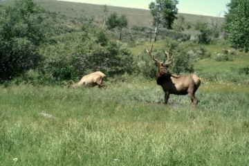 Colorado Hunting Photo 4